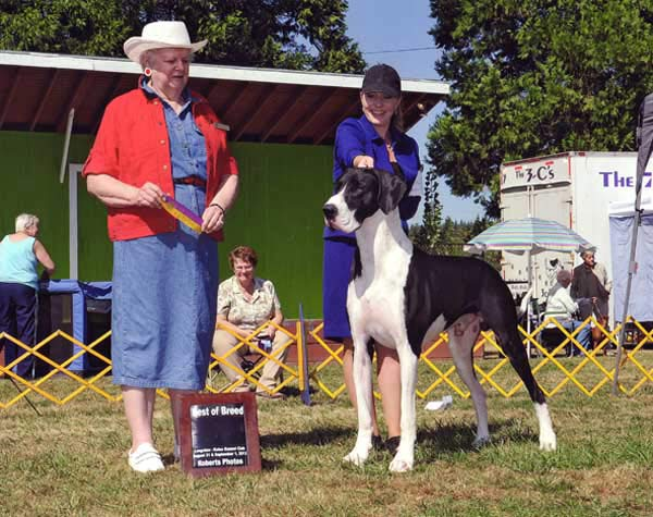 Doolin Great Dane Dog - Best of Breed