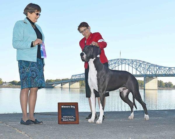 Remy - Great Danes - Winners Dog 2015